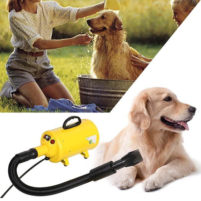 soffiatore per cani