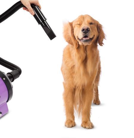 soffiatore per cani professionale cosa sono